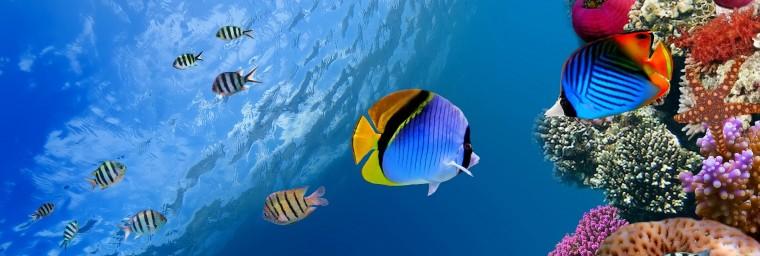 underwater-coral-fish-2560x1440.jpg