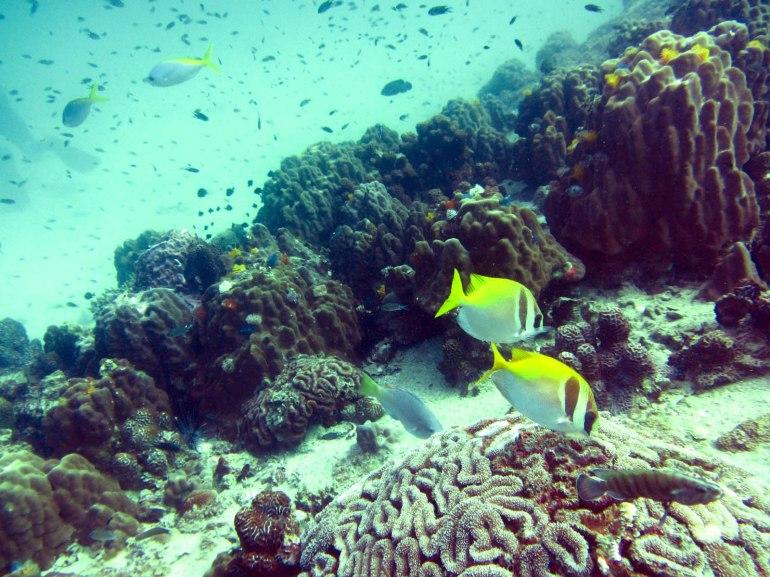 coral-fish.jpg