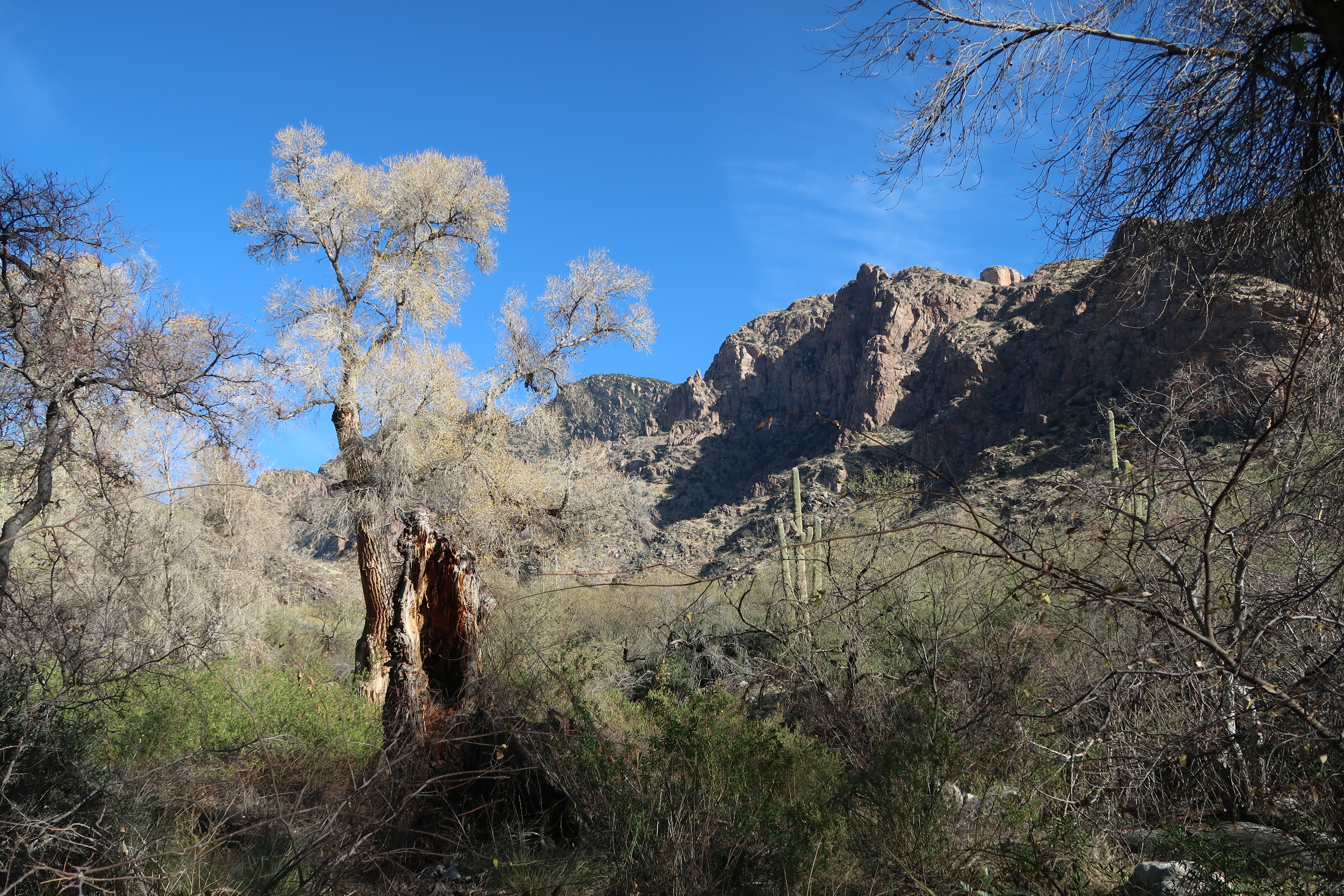 Pima canyon trail head green oasis