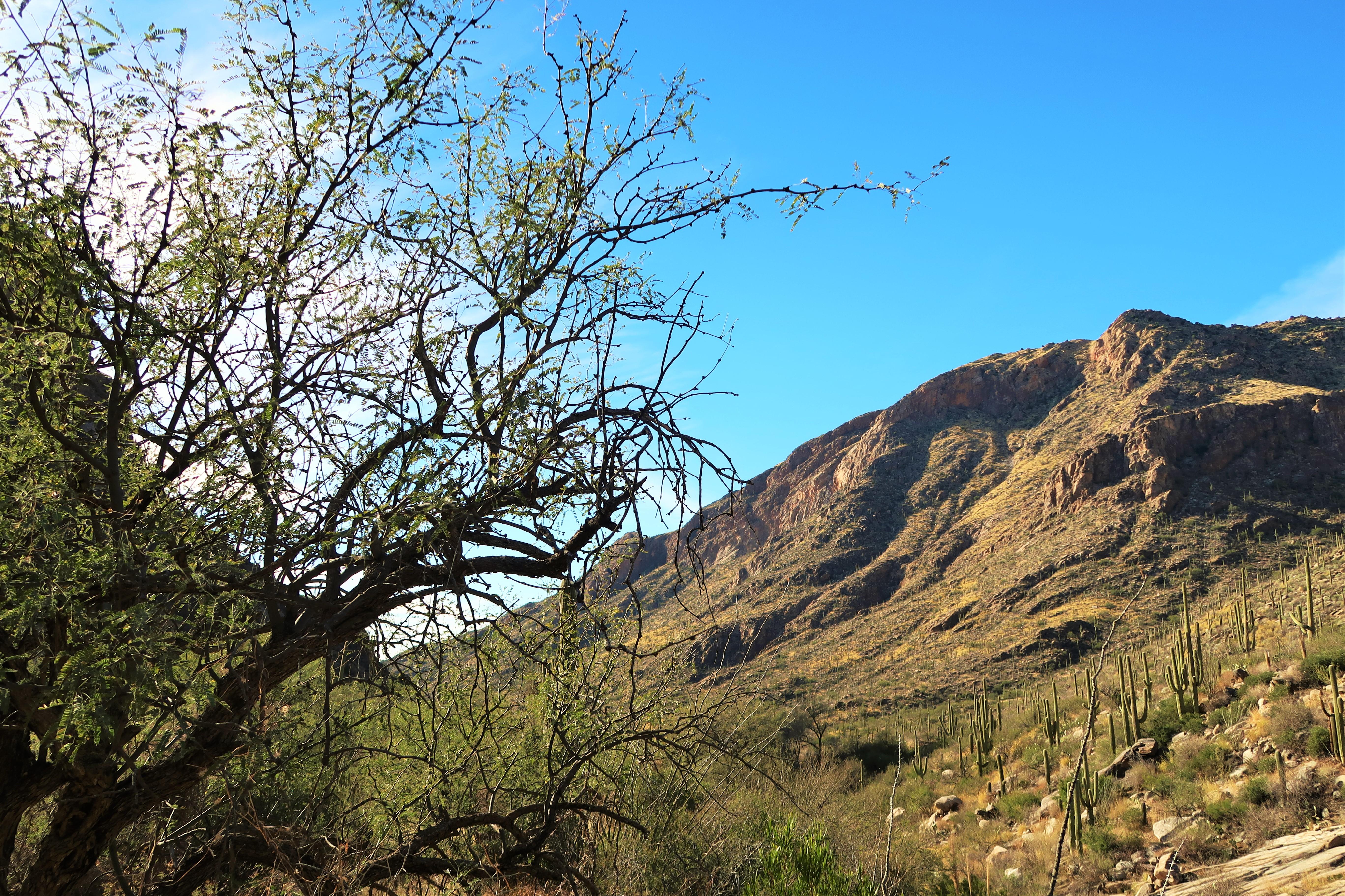 Santa Catalina mountains Tucson Arizona
