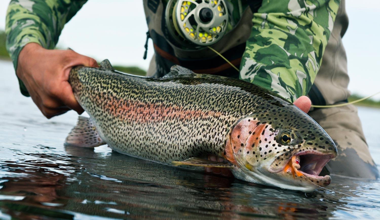 trout-tahoe-fishing