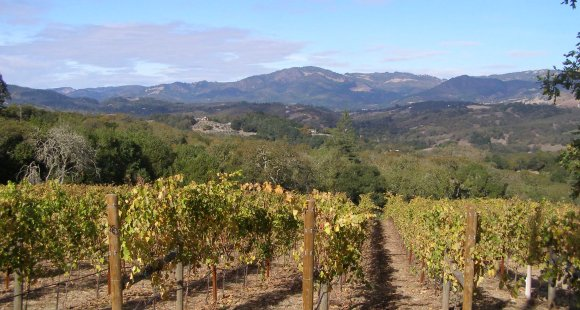 Grape Expectations: Why You Should Visit Wine Country USA